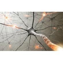 Новая роль цинка при повреждении зрительного нерва